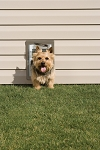 PetSafe Premium Wall Entry Aluminum Pet Door - Small