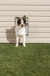 PetSafe Premium Wall Entry Aluminum Pet Door - Medium