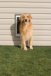 PetSafe Premium Wall Entry Aluminum Pet Door - Large